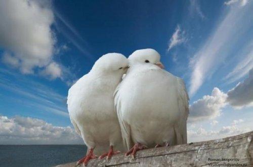 Святитель Иоанн Златоуст.    Что может сравниться с любовью? Ничто. Это – корень, источник и мать всех благ